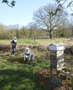 Hanging out in the apiary: making a hedge from willow
