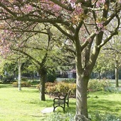 friends of vauxhall park